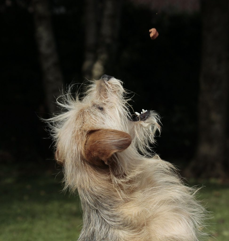 dog, eat, animal