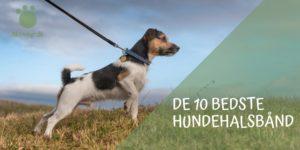 de 10 bedste hundehalsbånd halsbånd til hund