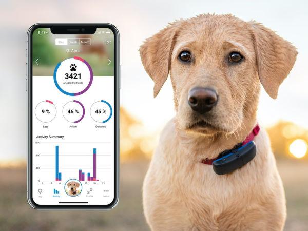 gps hundehalsbånd tracker til hund