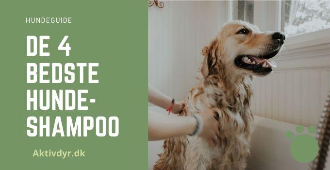 bedste hundeshampoo