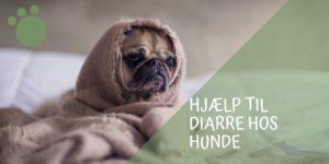 diarre hos hunde